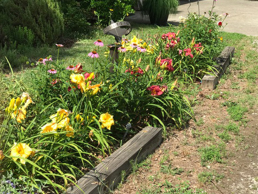 """Garden Design series:  """"What to plant where"""" - Flowers"""