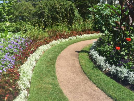Thinking of planting a shrub border?