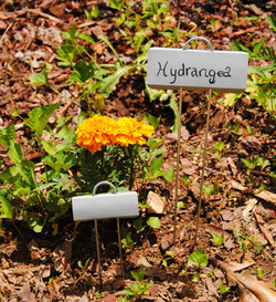 small golden marigold with a small z
