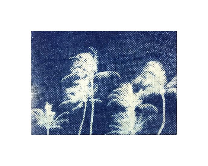 "6 Palm Trees - 8"" x 10"" Print"