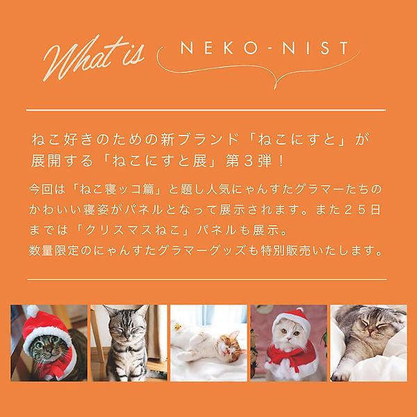 neko-nist-saporo-2.jpg