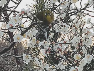 春が近づいてきました(^^)