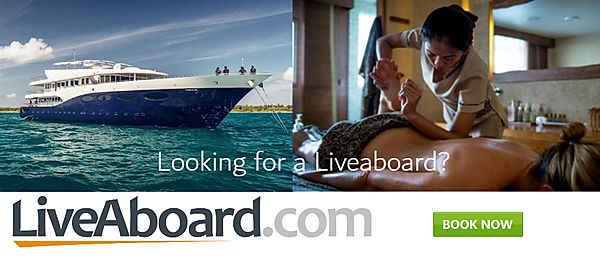 banner-scubaying-lookingforalivaboard.jp