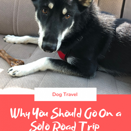 Why You Should Go on a Solo Road Trip with Your Dog