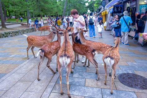 Deer's Market