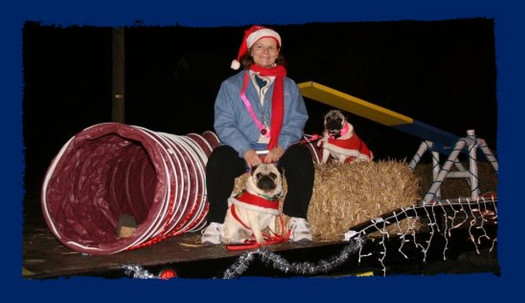 Pug at Holiday Parade