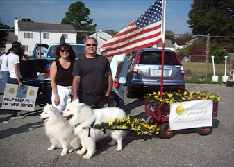 Samoyed Collecting food for local pet pantry
