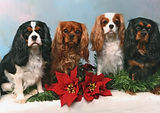 2009 Christmas Card.jpg
