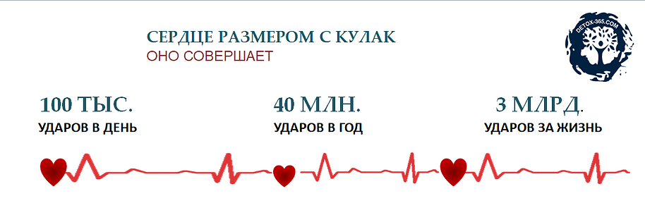 СЕРДЦЕ СОВЕРШАЕТ.png