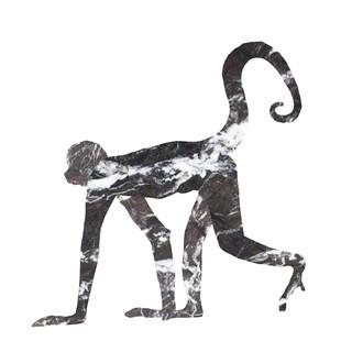 marmara maimou