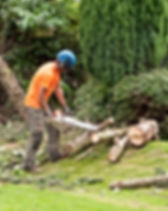 Woodcutter using a chain saw to cut the