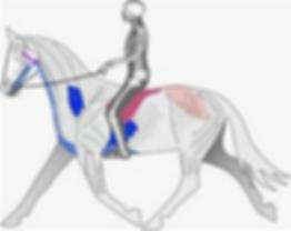Pferd und Reiter im perfekten Gleichgewcht