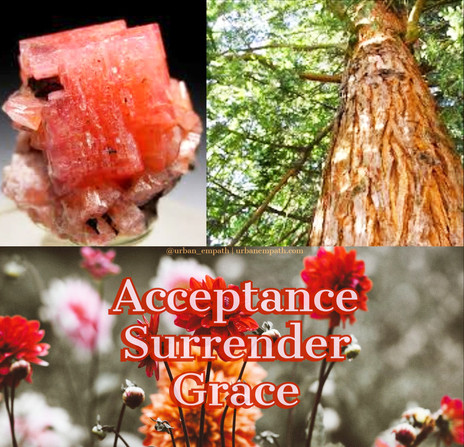 🌹🍃💎 Essential Oil & Crystal of the Day for July 25th, 2018!