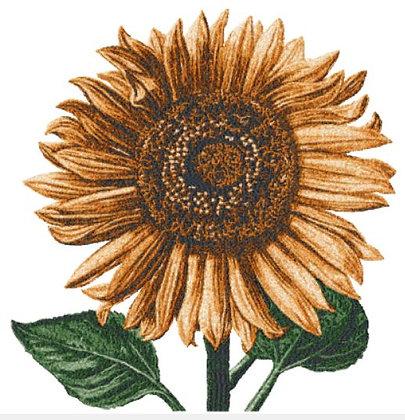 extra large sunflower