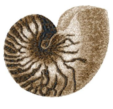 sea shell 2147a