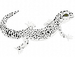 spotted lizard