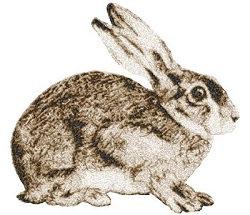 bunny watching