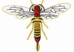 horntail fly