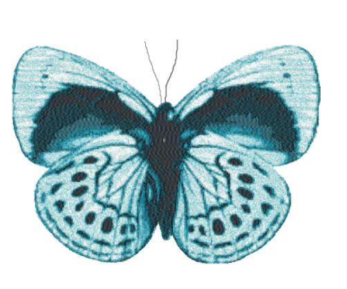 butterfly 2727
