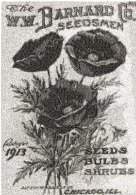 barnard seeds