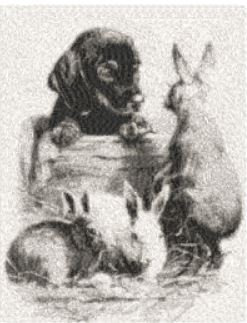 bunnies special friend