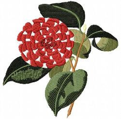 presleys victoria queen camellia