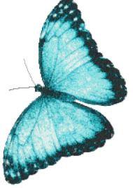 butterfly 2725