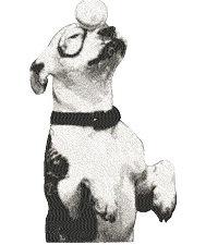 petie the pup