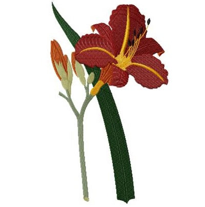 tawny day lily version 1
