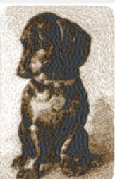 dachshund 2120