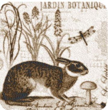 jordan botanique