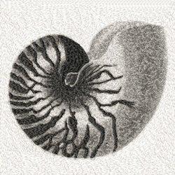 sea shell 2147