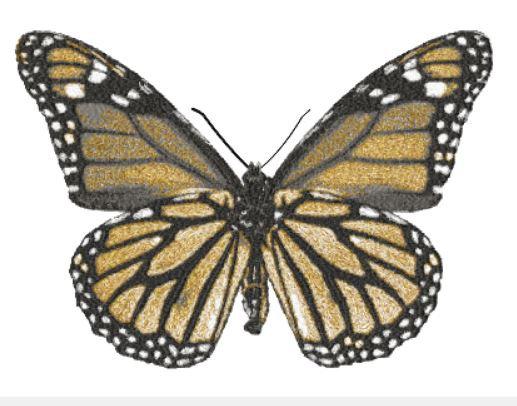 butterfly 2726