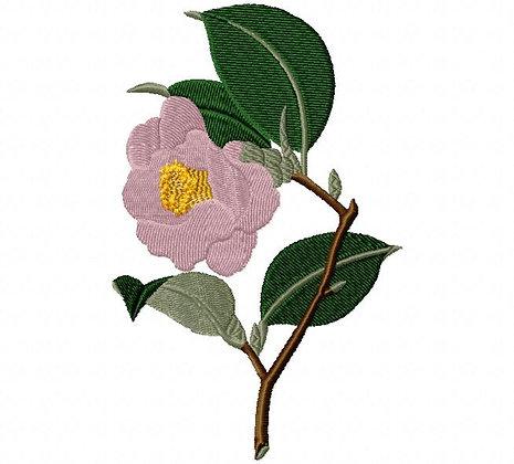rose camelia