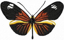 small postman butterfly set