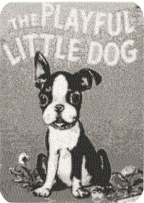 little dog cover