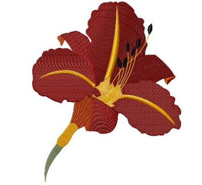 tawny day lily version 2