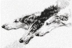 borzoi wolfhounds