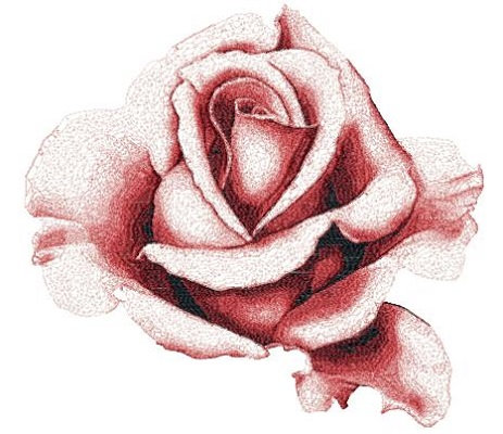 rose 3003