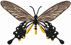 common clubtail butterfly