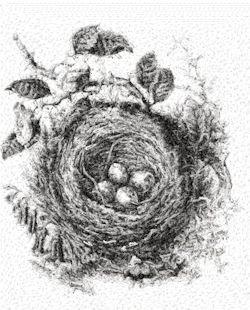 nest 2310