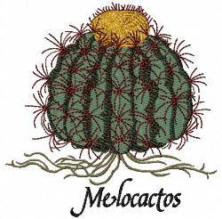 melocactos