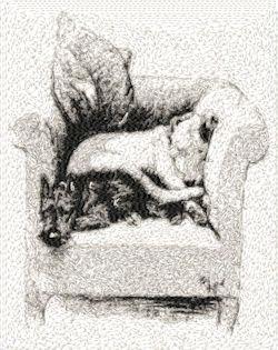 chair hogs
