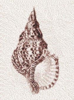 sea shell 2139