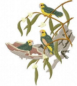 yellow-capped pygmy parrots