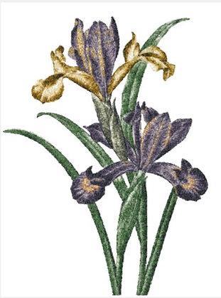 extra large vintage iris 2972