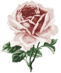 rose 2643
