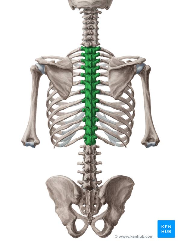 thoracic spine stretches for tennis and golf | movementality, Cephalic Vein