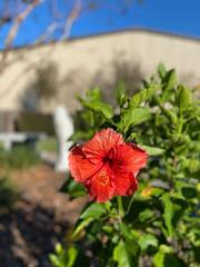 Memorial Garden 7.jpg