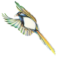 Header_Magpie.png